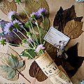 Presse à fleurs et feuilles pour herbier