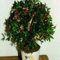1999 arbre bonbon