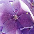 Mes fleurs 060718