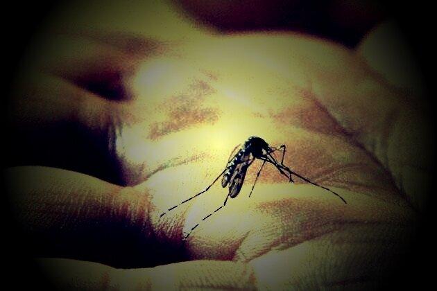 Doit-on-avoir-peur-du-moustique-tigre_scalewidth_630
