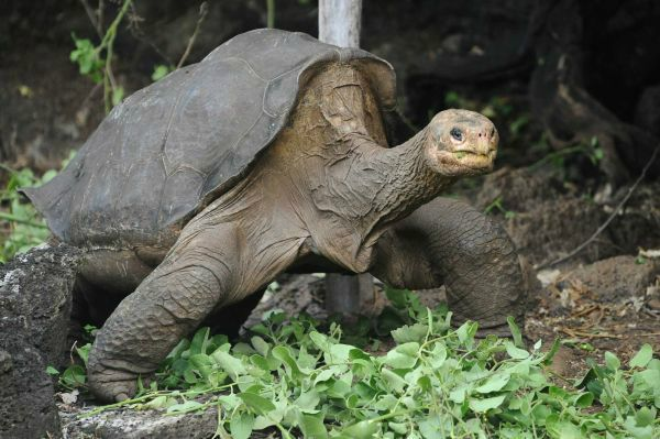lonesome george pg