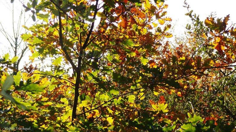 Feuillages automne 07121529